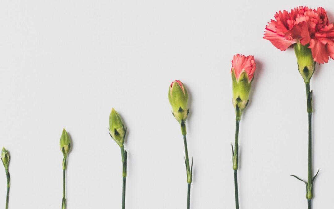 Serie: Aus der Krise lernen | Was ich gelernt habe